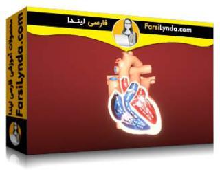 لیندا _ آموزش تجسم پزشکی در یونیتی بخش 03: استقرار و قابلیت استفاده (با زیرنویس فارسی AI)